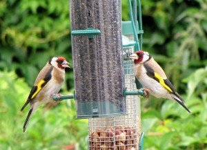 Wild Bird Tables and Feeders